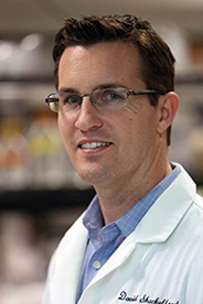 David Shackelford, Ph.D.