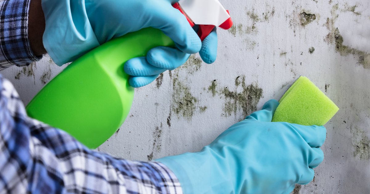 Combating Mold and Preventing Asthma Symptoms | American Lung Association